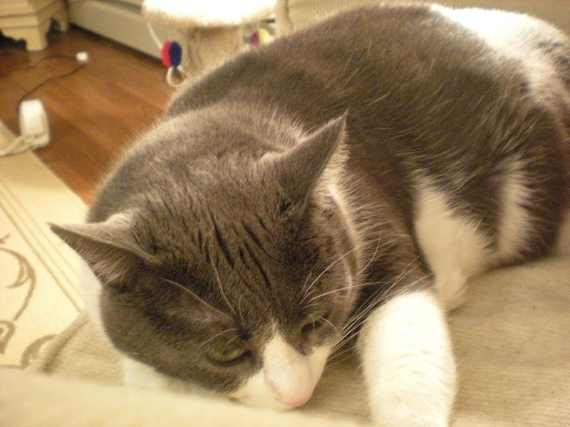 Cat stock 031