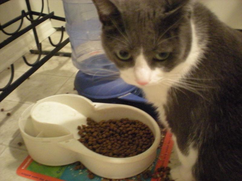 Cat stock 061