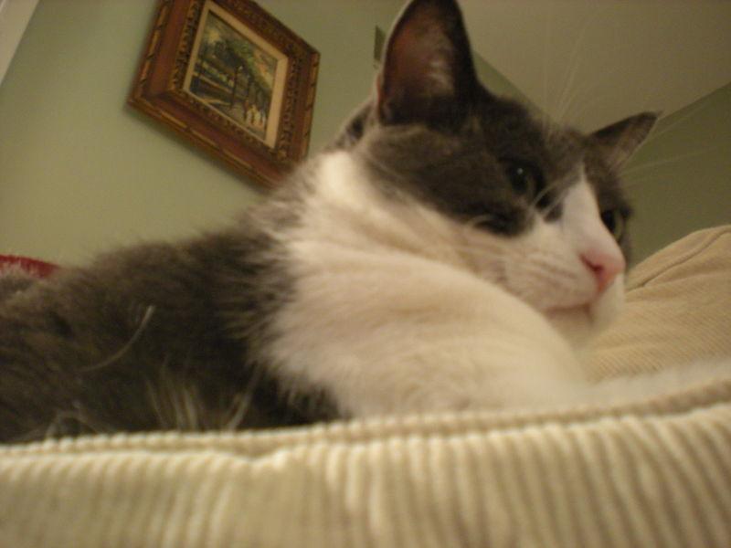 Cat stock 043