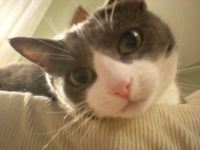 Cat stock 042