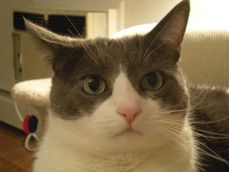 Cat stock 019