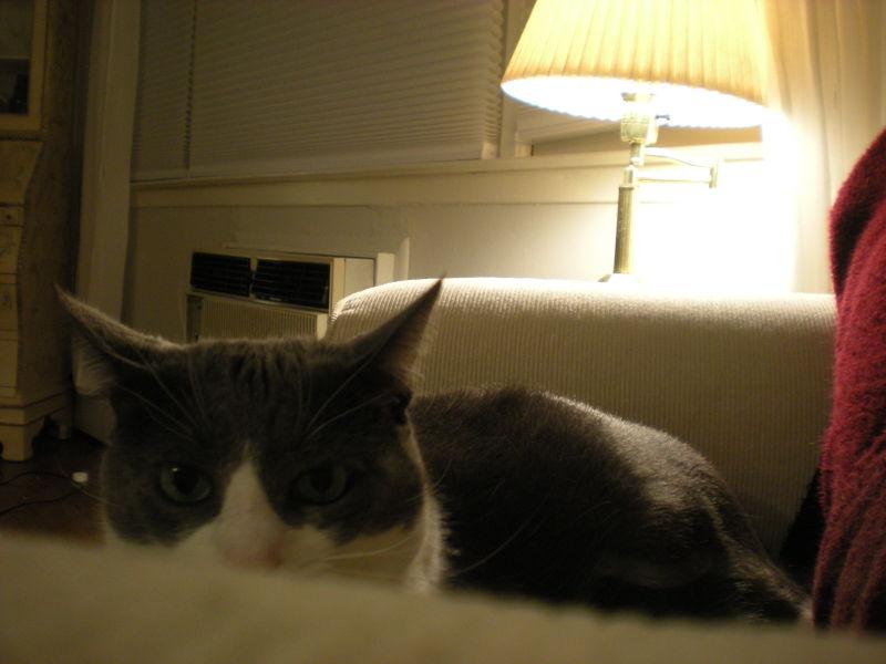 Cat stock 020