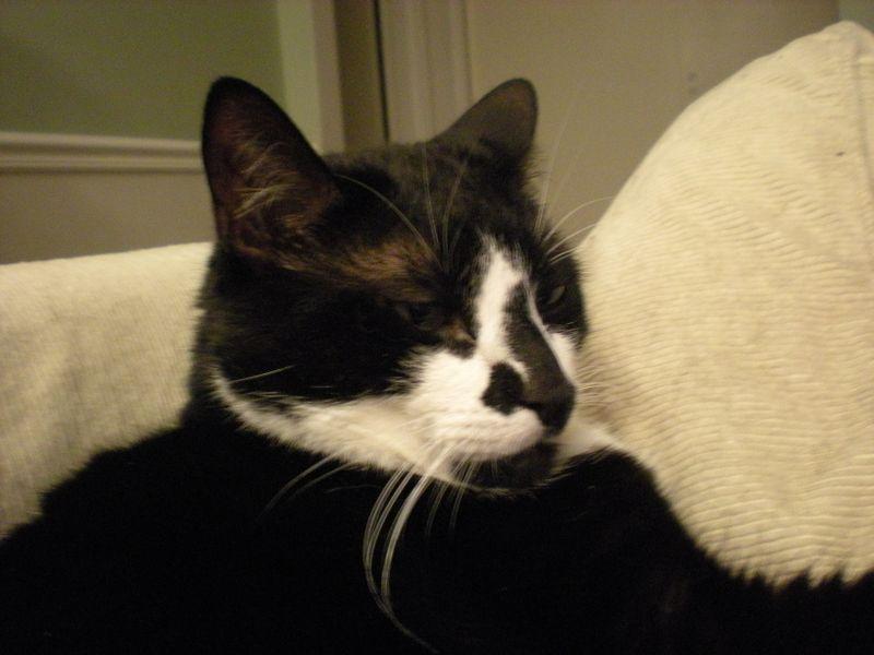 Cat stock 008