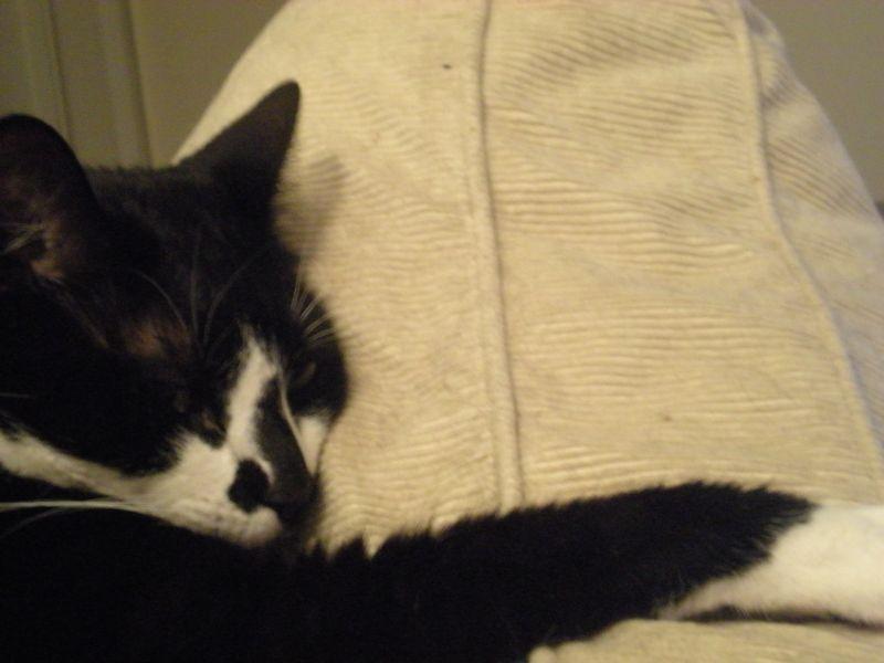 Cat stock 016