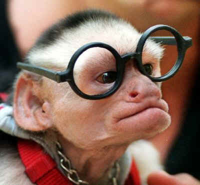 Monkey_Nerd_with_Glasses